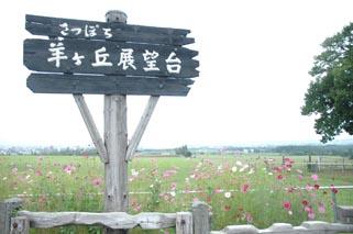 070906hitsuji2