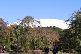 081101koishikawa02